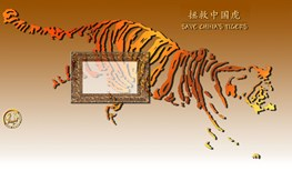 Save China's Tigers